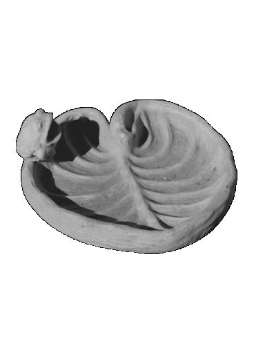 peppino ornamental 319